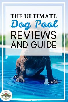 The Ultimate Dog Pool (Large Flower Gardening, Vegetable Gardening, Cattle Barn, Farm Lifestyle, Horse Feed, Baby Horses, Horse Crafts, Horse Quotes