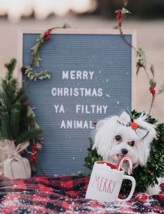 Merry Christmas, Ya Filthy Animal - Home Alone ( Keven ) Christmas Words, Christmas Post, Christmas Signs, Christmas Humor, All Things Christmas, Christmas Decorations, Funny Christmas Quotes, Christmas Thoughts Quotes, Christmas Messages Quotes