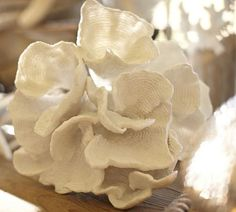 Faux Ear Coral | Pottery Barn