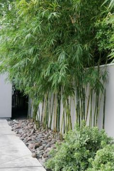 Need to remember to ask for a type of bamboo that isn't too 'thin' at the base like this as i don't want to see the ugly tin fence.