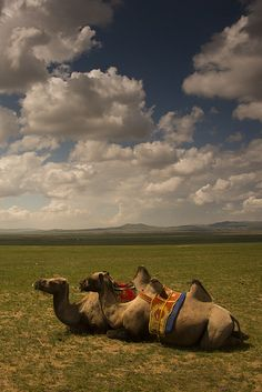 Mongolia by bsmethers, via Flickr