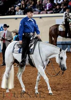Huntin For Chocolate; Grey western pleasure stud sold for $385,000 at the Congress Super Sale