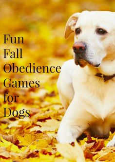 Enjoy the last crisp days of Autumn before the cold sets in with a few fun fall obedience training games for dogs that you can play outside! Check them out!