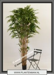 bamboe 270cm €120 excl BTW