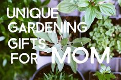 Searching for the right gift?  Then take a look at these awesome gardening gifts for mom.  My Mom is an avid gardener and enjoys puttering away with her plants.  There are lots of ideas:Gifts Under $25 if you are looking for a little...