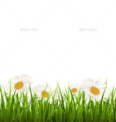 Buy Green Grass Lawn with White Chamomiles by Makkuro_GL on GraphicRiver. Green grass lawn with white chamomiles isolated on white. Vector Design, Flyer Design, Green Grass, Green Lawn, Landscape Background, Flower Backgrounds, Back Gardens, Yard Landscaping, Vector Free