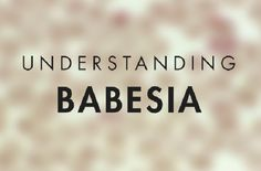 by Dr. Bill Rawls Last updated 10/24/16    Babesia is a distant, but less virulent cousin of malaria. It is a protozoan, meaning it is a one-celled organism with a nucleus surrounding its DNA (protozoan have a nucleus like other higher level organisms, as opposed to bacteria which have no true nucleus). Otherwise it