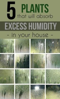 5 Plants That Will Absorb Excess Humidity in Your House » It is known that too high relative humidity in the room is not exactly what we need for a healthy environment.