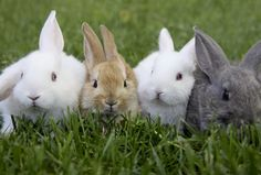 baby bunnies will right any wrong » saussie
