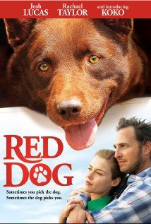 This movie is so good! It will make you cry,(of course, it is a dog movie) but it will make you laugh first. must see it. Dog Teeth, Dog Shots, Teeth Cleaning, Dog Grooming, Labrador Retriever, Dogs, Animals, Animales, Animaux