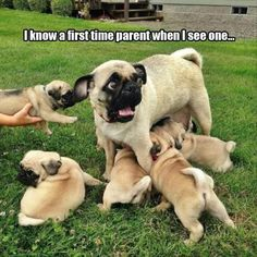 Funny Animal Pictures Of The Day 25 Pics #daycarefunny