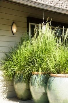 Backyard Plants: that repel bugs! Lemon grass & Citronella grass both naturally repel mosquitoes; Lavender; Marigolds; Flossflowers (Ageratum); Pennyroyal