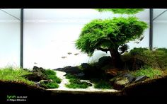"The Famous ""Christmas Moss"" Aquascape"