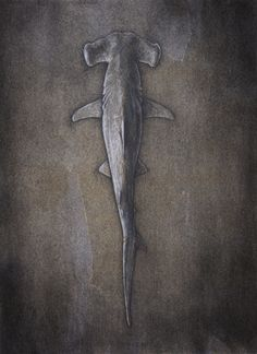 Hammerhead Shark - Artist Winkstink #drawing #charcoal #pencil #watercolor #ColoredPencil #art #floating