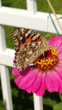 Moth, Insects, Animals, Butterflies, Photography, Animais, Animales, Animaux, Animal