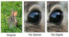 Basic Digital Camera Guide - Digital Zoom and Optical Zoom