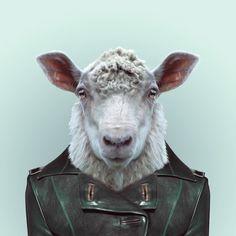 Sheep / Zoo portraits-Yago PARTAL