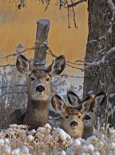 Deer looking on