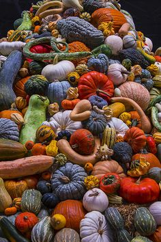 Pumpkin Art - Pumpkins and Gourds Pile by Garry Gay Pumpkin Squash, Pumpkin Art, Orange Aesthetic, Autumn Aesthetic, Fall Gift Baskets, Leaves Changing Color, Thanksgiving Blessings, Autumn Illustration, Surreal Photos