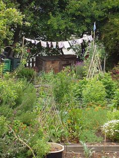 cottage garden drying | ♥ Clothesline... | Pinterest