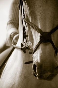 A figure eight bridle on a handsome white gelding. What do you flat your horses in?