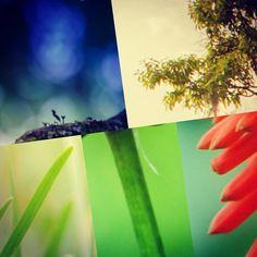 #flowers #flower #petal #petals #nature #beautiful #love #pretty #plants #blossom #sopretty #spring #summer #flowerstagram #flowersofinstagram #flowerstyles_gf #flowerslovers #flowerporn #botanical #floral #florals #insta_pick_blossom #flowermagic #instablooms #bloom #blooms #botanical #floweroftheday Florals, Bloom, Spring Summer, Flower, Pretty, Instagram Posts, Nature, Plants, Beautiful