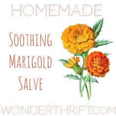 From Lucy at Wonderthrift: Thrifty Beauty: DIY Soothing Marigold/ Calendula Salve Homemade Beauty, Diy Beauty, Beauty Ideas, Natural Skin Care, Natural Health, Salve Recipes, Going Natural, Beauty Recipe, Natural Cleaning Products