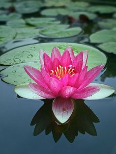 Waterlily prob the flower with the most meaning to me <3