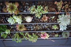 amazing garden wall