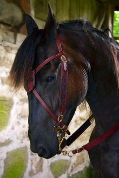 War horse bridle. http://ailim.blogg.se/