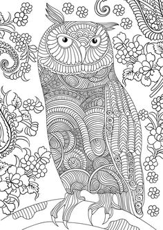 269 Best Owl Coloring Pages For Adults Images On Pinterest In 2018 - Free-owl-coloring-pages-for-adults