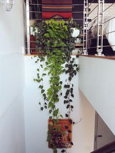 Indoor plants help to keep your air clean! This one looks great draped down the staircase