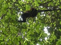20 Living Creatures To Search Out In Costa Rica's Corcovado National Park