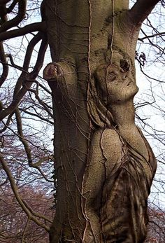 Lady in tree. Beautiful! Beats those awful carvings one sees around in yards.