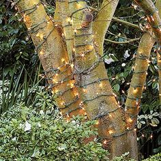 For a soft glow at night, wrap tree trunks and branches with strands of white lights. Define borders by placing small candles in glass holders along mow strips, walls, and walkways. Tree Lighting, Outdoor Lighting, Lighting Ideas, Outdoor Decor, Garden Lanterns, Twinkle Lights, String Lights, Xmas Lights, Small Candles