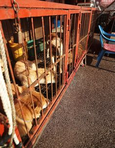 [Breaking News] Illegal dog slaughter to be banned in Moran Market (This does not ban the sale of dog meat)  The slaughter of dogs will be abolished and butchery facilities removed from South Korea's largest dog meat market, in a move which officials described as a step toward ending the animal welfare controversy over the industry.   The decision was announced Tuesday by Seongnam City Government and the vendors' association of Moran Market, which, among others, represents its 22 dog meat…