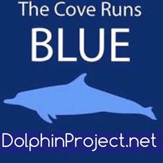 Taiji: Blue Cove Day! No hunting! - Google Search