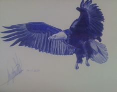 Biro pen drawing of an eagle, completed 2011. Drawing Commissions, Biro, Eagles, Bald Eagle, Drawings, Artist, Artwork, Animals, Work Of Art