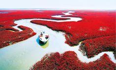 Todo ano no outono chinês, centenas de turistas do mundo todo se reúnem para ver um deslumbrante espetáculo da natureza. A Red Beach,ou a Praia vermelha da China,que é a maior área úmida do mundo ,situada em Liaoning no nordeste da China. http://clickcuriosidades.blogspot.com.br/2017/09/a-incrivel-praia-vermelha-da-china.html