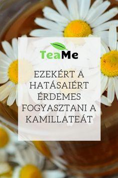 A kamilla tea pozitív hatásai Tea Blog, Food, Essen, Meals, Yemek, Eten