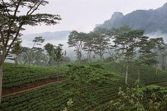 紅茶のプランテーション Sri Lanka-Tea plantation ◆スリランカ - Wikipedia http://ja.wikipedia.org/wiki/%E3%82%B9%E3%83%AA%E3%83%A9%E3%83%B3%E3%82%AB #Sri_Lanka