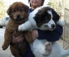 i'm seriously going to adopt one of these dogs... help me choose. MEHHHH FLUFFERS WITH NO NAMES.