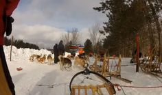 Experience a truly Canadian adventure with Haliburton Forest's dog sledding tours. Warm clothes & a sense of adventure required. Sled, How To Find Out, Trail, Wildlife, Canada, Tours, Activities, Adventure, Dog