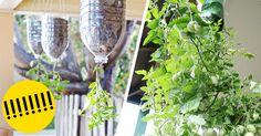 ¡Empieza a cultivar tus propios productos de una manera ecológica y original! :D