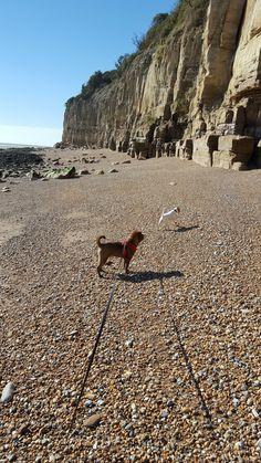 #Dogwalker #balham #tooting #clapham #wandsworth #dogwalkers #dogwalking www.harrisons-dogs.co.uk