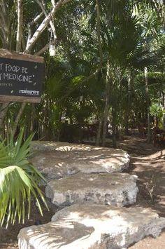 Tulum Tourism Best of Tulum, Mexico - Tripadvisor Vegan Food, Vegan Recipes, Wood Burning Oven, Tulum Hotels, Sustainable Food, Sustainability, Trip Advisor, Congratulations, Tourism