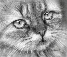 40 Beautiful Animal Sketches  (13)