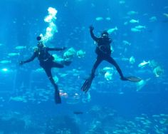 Dive into the blue at the S.E.A. Aquarium with our Open Ocean Dive programme.