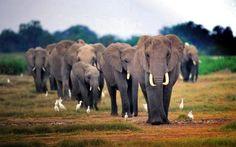 Imágenes de elefantes en Mozambique.- El Muni.