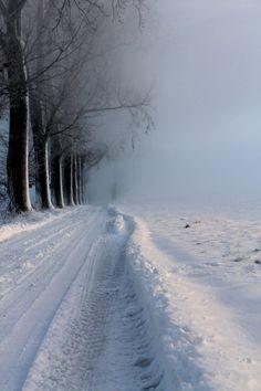 trail  w
